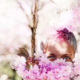 Kirschblütenallee00004