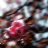 Kirschblütenallee00008